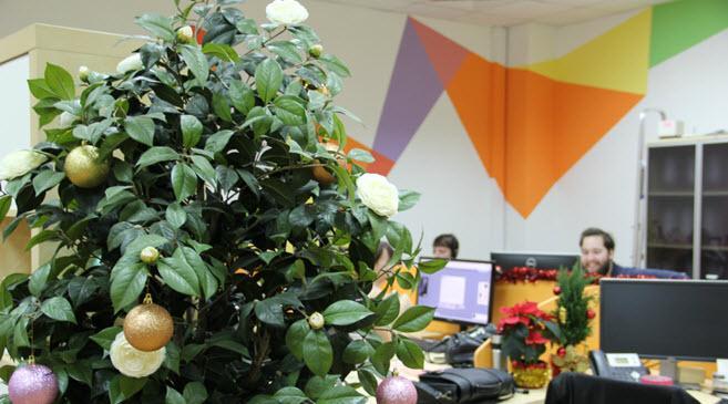 В I-Media в офисе свежо и зелено