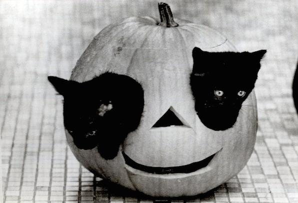 Хеллоуин в рассылках, кошки