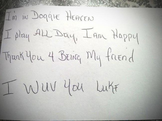 Письмо от имени собаки