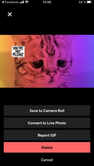 Гифку, созданную в приложении, можно сохранить на телефон или воспользоваться ей через онлайн-версию (аккаунты синхронизируются)