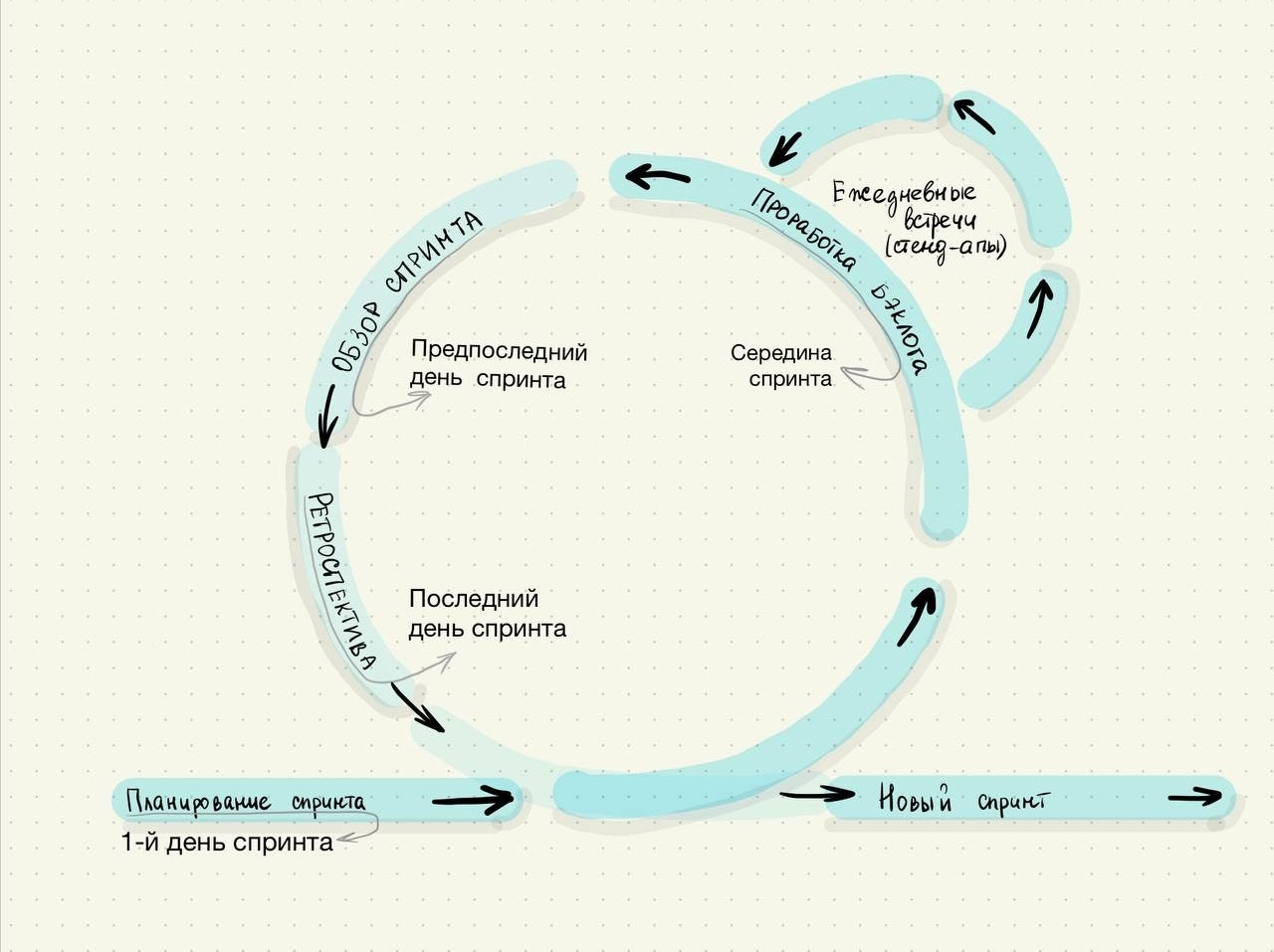 По такому циклу проходят все спринты